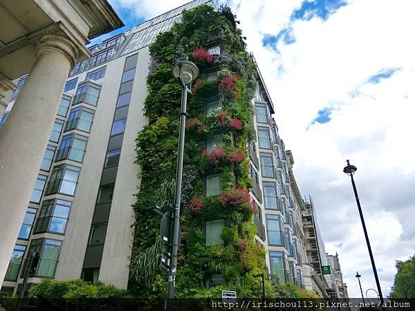 圖19 美麗的植栽外牆.jpg