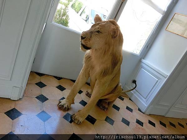 圖18 獅子標本.jpg