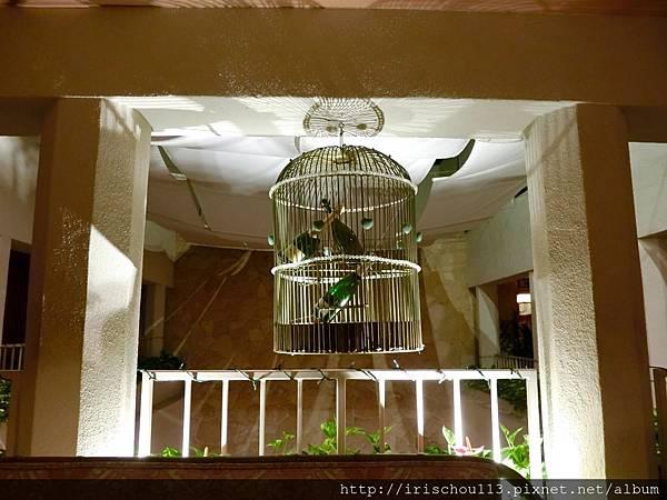 12) 酒吧區的籠中鳥.jpg