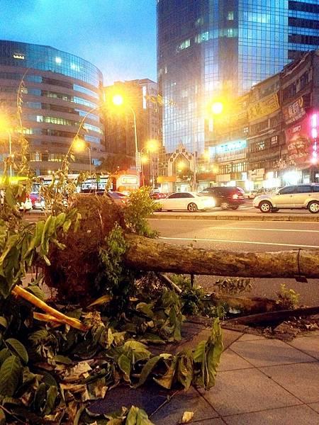 P1)蘇力颱風肆虐後,造成台北市多處路樹被連根拔起。.JPG