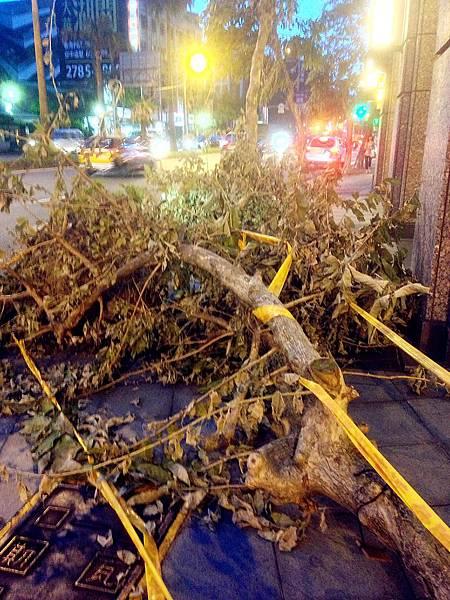 P2)蘇力颱風肆虐後,造成台北市多處路樹被連根拔起。.JPG