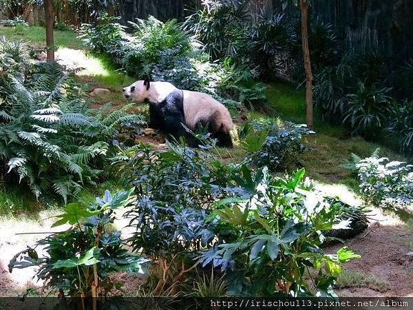 P26)熊貓.jpg