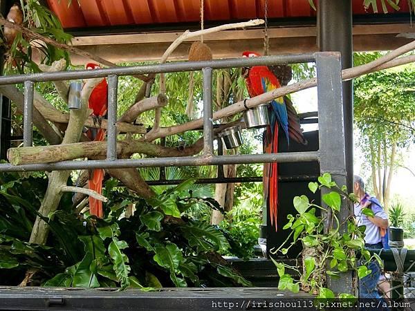 P27)鸚鵡.jpg