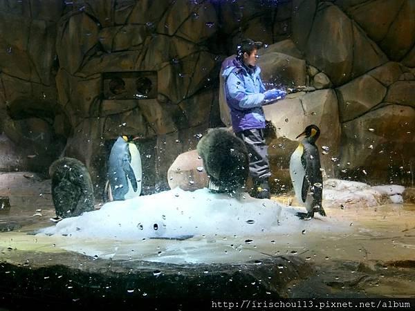 P30)企鵝.jpg