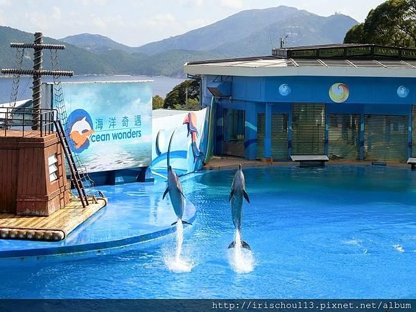 P33)海豚表演.jpg