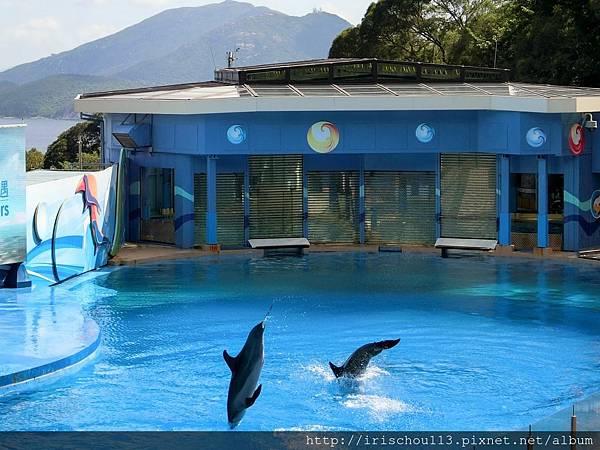 P34)海豚表演.jpg