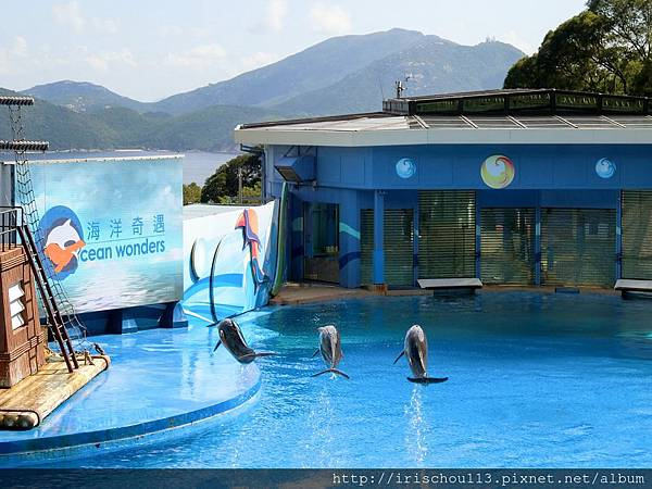 P35)海豚表演.jpg