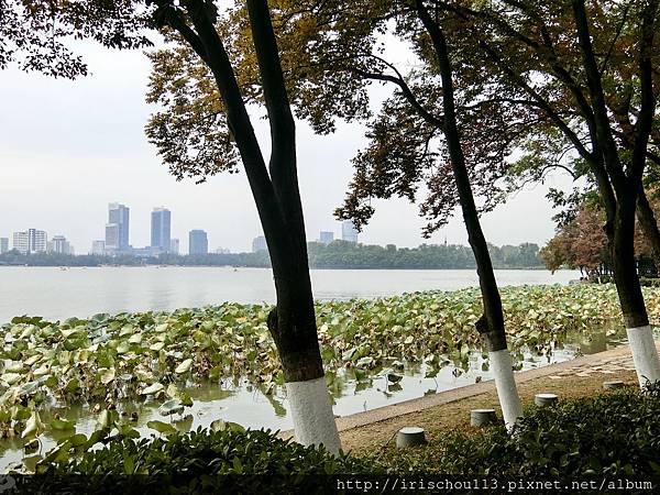 P12)玄武湖畔的蓮花塘.jpg