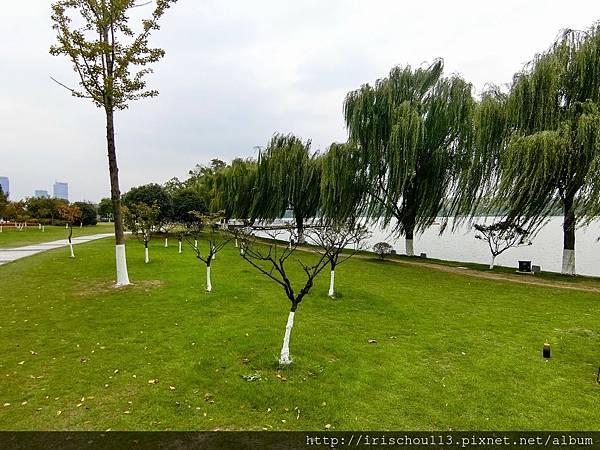 P14)玄武湖畔.jpg