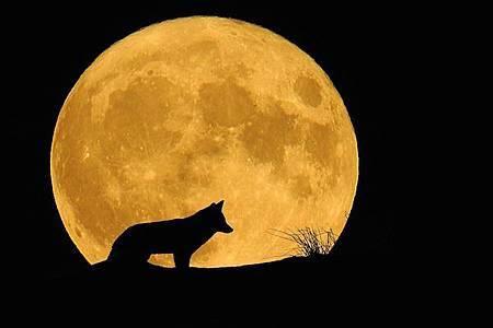 moon-2069026_960_720.jpg