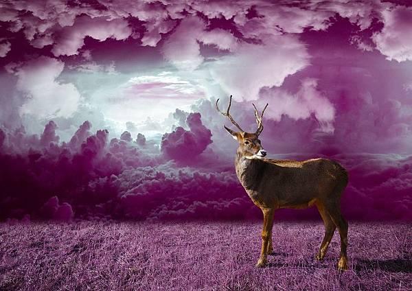 deer-1059773_960_720.jpg