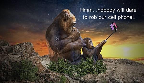 monkey-3554261_960_720.jpg