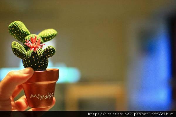 【Miyako。小視野】小小仙人掌