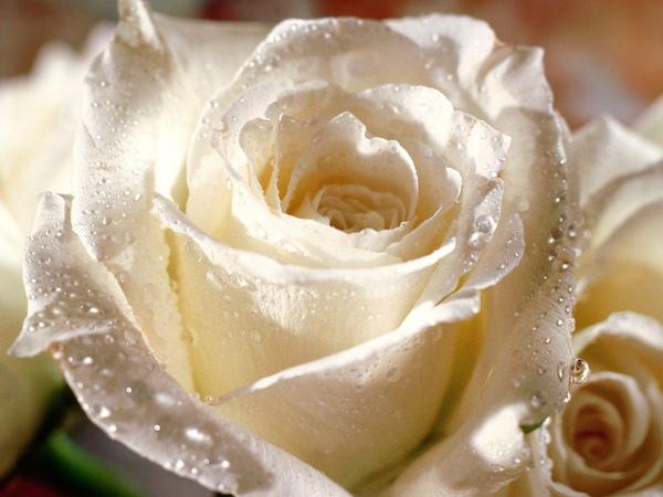 Hope-Blooms [DesktopNexus[1][1].com].jpg