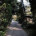 新竹-橘園-橫山村-土雞玉米雞-休閒農莊 (24)