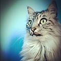 我是貓,緊張,放鬆,生氣,害羞,就是不笑,我是貓。