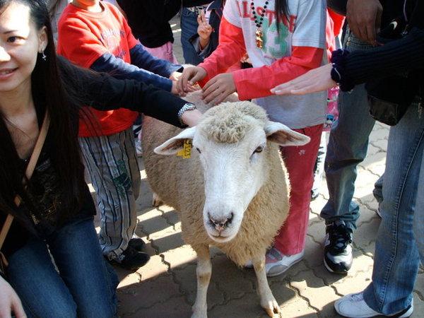 29小羊大家摸