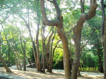 彰化八卦山-華陽公園06