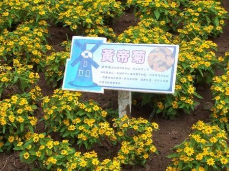 桃園花海農場15.JPG