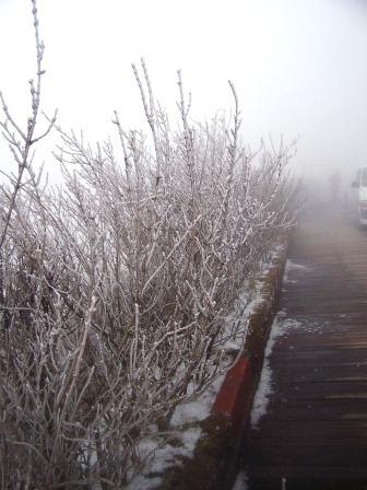 太平山的霧淞15.JPG