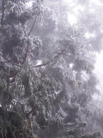 太平山的霧淞18.JPG