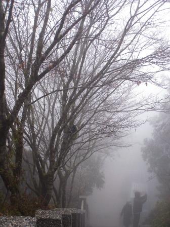 太平山的霧淞22.JPG