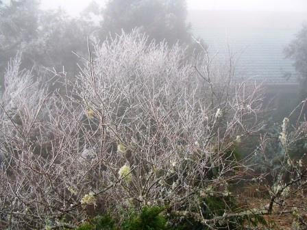 太平山的霧淞23.JPG