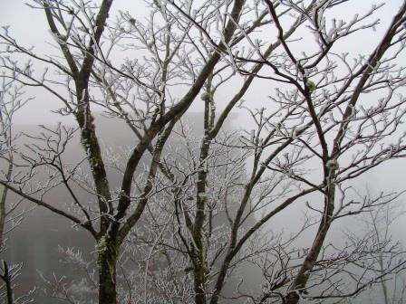 太平山的霧淞25.JPG