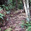 新山登山步道02.JPG