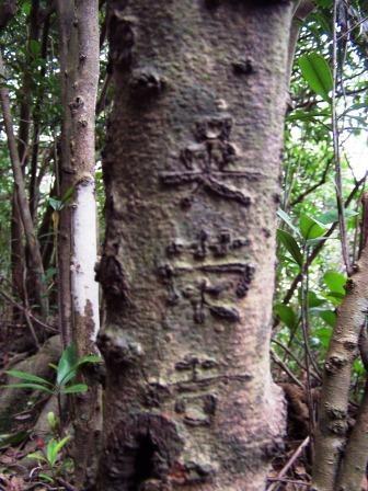 新山登山步道04.JPG