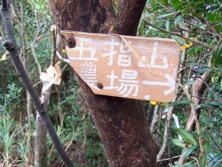新山登山步道06.JPG