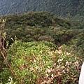 新山登山步道10.JPG