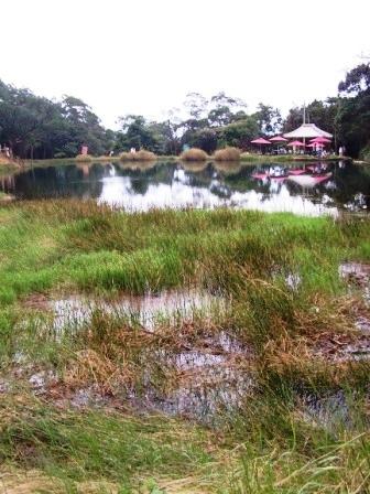 新山夢湖152.JPG