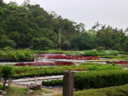 仁山植物園-東方庭園07.JPG