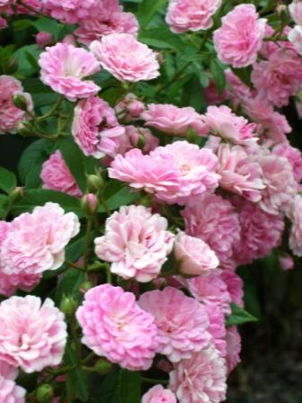 仁山植物園-東方庭園10.JPG