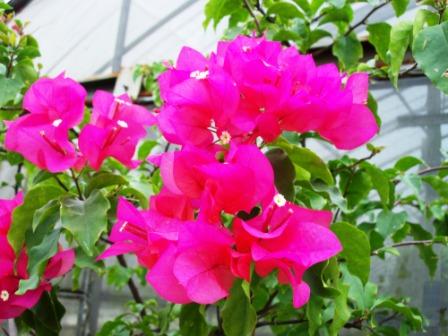 仁山植物園-東方庭園12.JPG