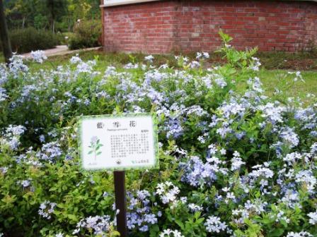 仁山植物園-歐式庭園67.JPG