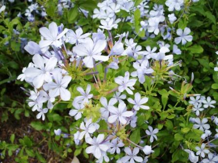 仁山植物園-歐式庭園68.JPG
