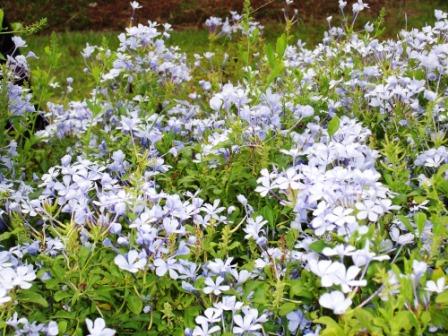 仁山植物園-歐式庭園75.JPG