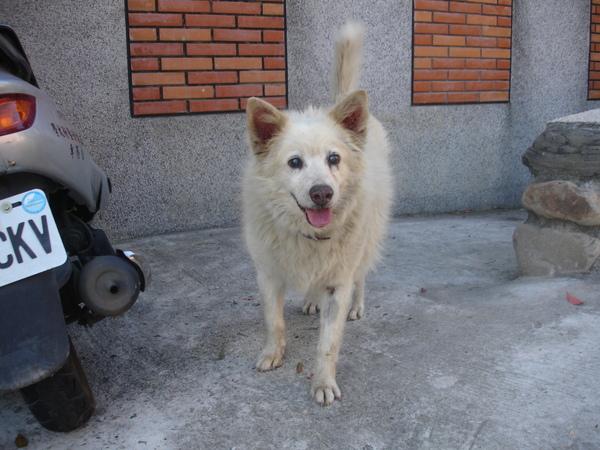 TNUA Dogs 001.jpg