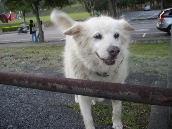 TNUA Dogs 019.jpg
