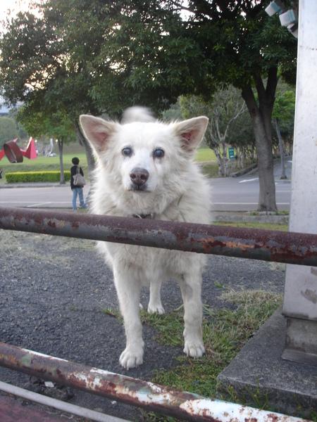 TNUA Dogs 021.jpg