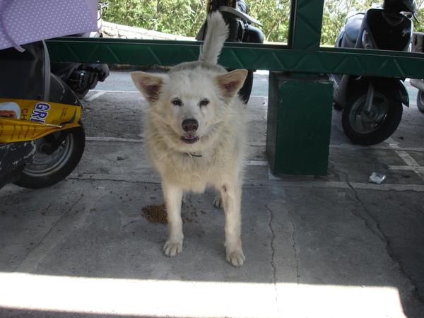 TNUA Dogs 025.jpg