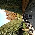 銀閣寺出入口,一片綠意很棒