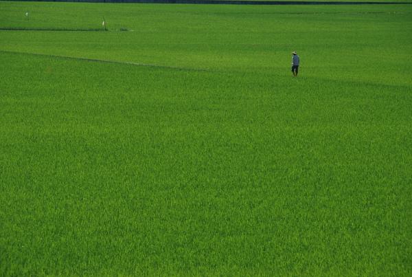 這位阿伯的田地應該很大
