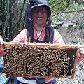 一群小蜜蜂在我手上耶!!!