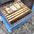 小蜜蜂的家