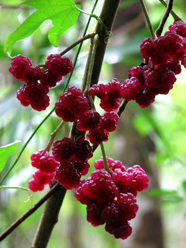 fruit07.jpg