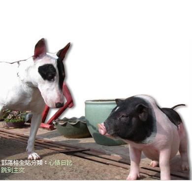 pig.bmp