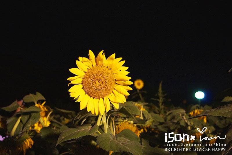DSC05746.JPG